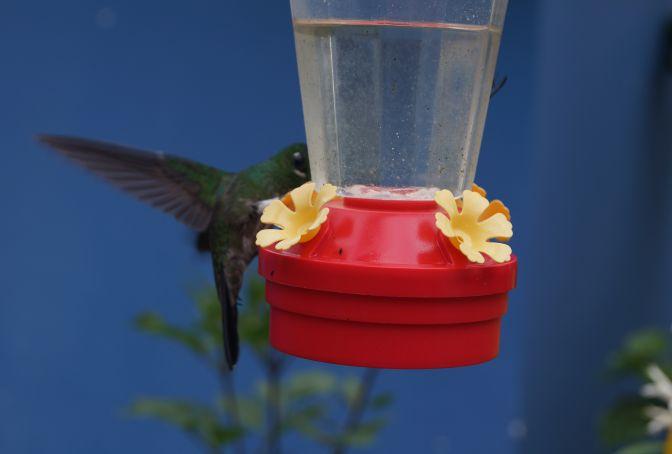 Natural Bird Reserve Proaves